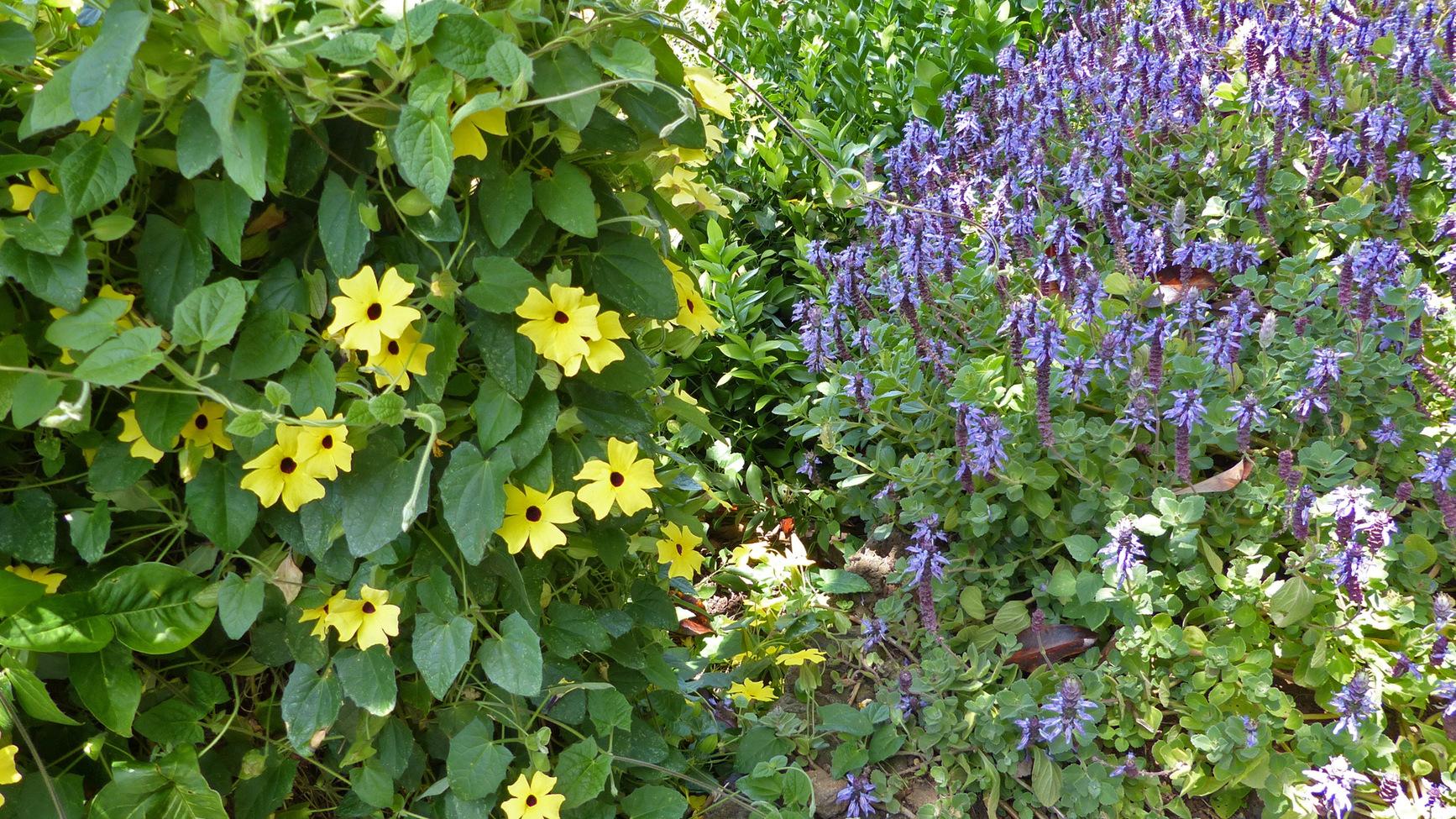 Permalink to Botanischer Garten Rheinland Pfalz